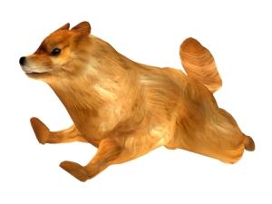 Pomeranian_1