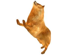 Pomeranian_2
