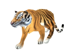 Tiger_3